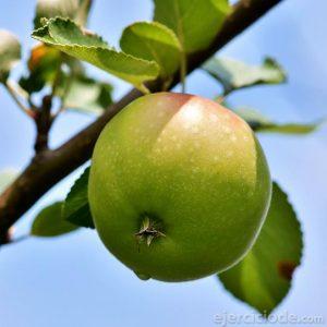 Manzana de color verde
