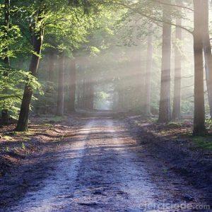 Luz al amanecer