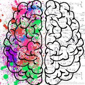 Cerebro con dos hemisferios diferentes